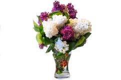 Mezcla de lila común púrpura y del blanco (syringa) en el florero aislado Fotos de archivo