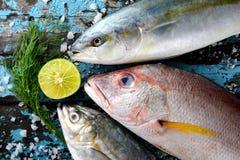 Mezcla de los pescados del pargo rojo Fotografía de archivo libre de regalías