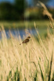Mezcla de pájaros Foto de archivo