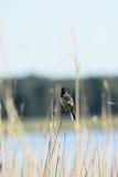 Mezcla de pájaros Fotos de archivo