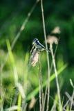 Mezcla de pájaros Imagen de archivo libre de regalías
