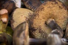 Mezcla de setas comestibles del bosque Foto de archivo