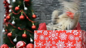 Mezcla de tres escenas, muchacha hermosa con un gato en alcohol del día de fiesta rodeado por la decoración del ` s del Año Nuevo almacen de video