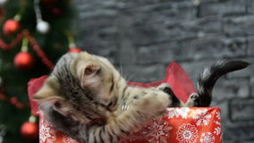 Mezcla de tres escenas, muchacha hermosa con un gato en alcohol del día de fiesta rodeado por la decoración del ` s del Año Nuevo almacen de metraje de vídeo