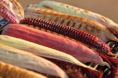 Mezcla de variedades de maíz nativo y de maíz asados a la parrilla en fuego caliente con carbón de leña imagenes de archivo