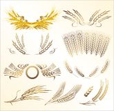 Mezcla del trigo