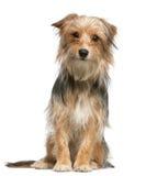 Mezclado-críe el perro, 12 meses, sentándose imagen de archivo libre de regalías