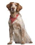 Mezclado-críe el perro que desgasta el pañuelo rojo foto de archivo libre de regalías
