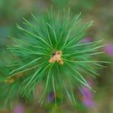 Mezclador del árbol Fotografía de archivo libre de regalías