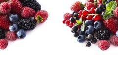 Mezcle las bayas y las frutas en la frontera de la imagen con el espacio de la copia para el texto comida Negro-azul y roja Zarza Imagen de archivo libre de regalías