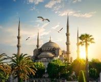 Mezquita azul en la tarde del verano Imágenes de archivo libres de regalías