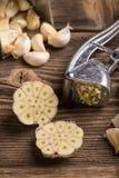 Mezza lampadina dell'aglio Immagine Stock Libera da Diritti
