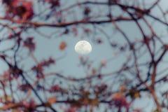 Mezza luna e cielo blu, con l'offuscamento dei fiori di tromba ottimistici nella priorità alta Immagini Stock Libere da Diritti