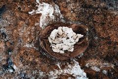 Mezza noce di cocco con le conchiglie dentro su fondo di pietra Immagini Stock