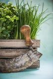 Mezzaluna and fresh herbs in wooden pot Stock Photos
