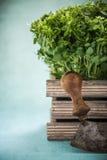 Mezzaluna and fresh herbs in wooden pot Stock Photo