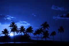 Mezzanotte tropicale della luna piena della siluetta delle palme Fotografie Stock Libere da Diritti