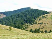 Mezze foresta e metà campo fotografie stock
