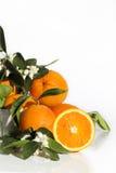 Mezzi fiori d'arancio arancio 2 Immagini Stock