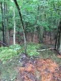 Mezzo del legno Immagine Stock