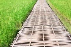 Mezzo di bambù del passaggio pedonale di grande giacimento del riso, fondo della natura fotografia stock