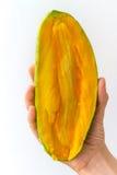 Mezzo mango di Golek a disposizione Immagini Stock