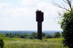Mezzogiorno a giugno Annidi con le cicogne sulla vecchia torre di acqua distese Immagini Stock Libere da Diritti