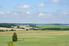 Mezzogiorno a giugno distese spazio Bella vista dei campi e del bosco ceduo un giorno soleggiato Fotografie Stock