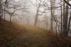 Mgłowy lasu ślad obraz royalty free