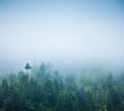Mgła Obraz Royalty Free
