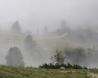 Mgła i ścieżka Obraz Royalty Free