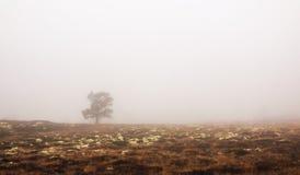 Mgła i drzewo fotografia royalty free