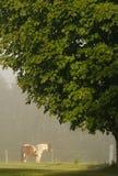 mgła koń Obraz Royalty Free