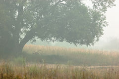 mgła krajobraz obrazy royalty free