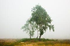 mgła krajobraz zdjęcia royalty free