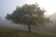 mgła krajobrazu Obrazy Stock