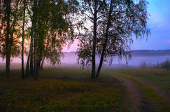 Mgła na krawędzi drewno Obraz Stock