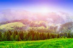 mgła na lesie sosny i łąki w górach, bajecznie fantastyczny krajobraz zdjęcia stock