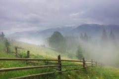 Mgła na paśniku obraz stock
