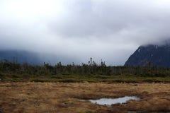 Mgła Nad bagnami w wodołazie zdjęcie royalty free