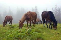 mgła pasający konie Zdjęcie Royalty Free