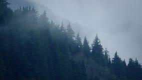 Mgła Rusza się Nad drzewami W Dzikim zbiory