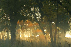 mgła się 2 rainbow Zdjęcie Stock