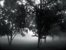 mgła się drzewa Fotografia Stock