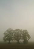 mgła się drzewa Obraz Stock