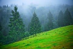 mgła się jedlinowi drzewa Obrazy Stock