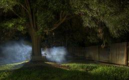 mgła tajemnicza fotografia stock