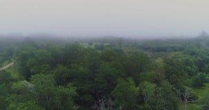 Mgła trutnia lota natury Lasowy Jeziorny ranek plenerowy, zmierzch zbiory