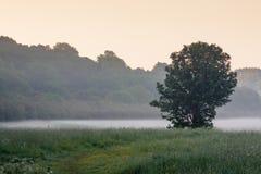 Mgła w łące Zdjęcie Stock