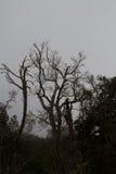 Mgła w Bosque De Strzępiący się Jorge parku narodowym Obraz Royalty Free